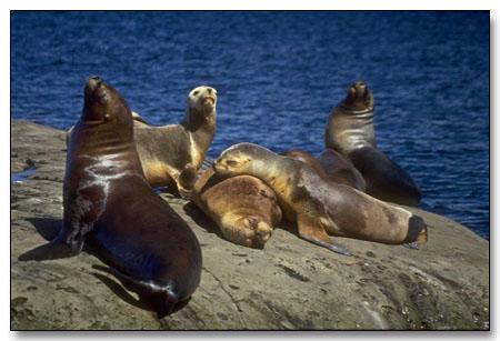 Tierra Del Fuego Island
