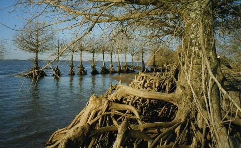 Остров Тимотео Домингес CW5F