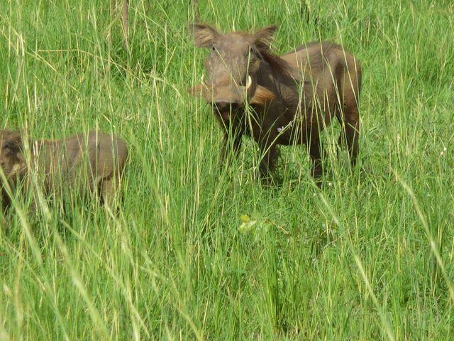 Uganda 5X1RO Image 16