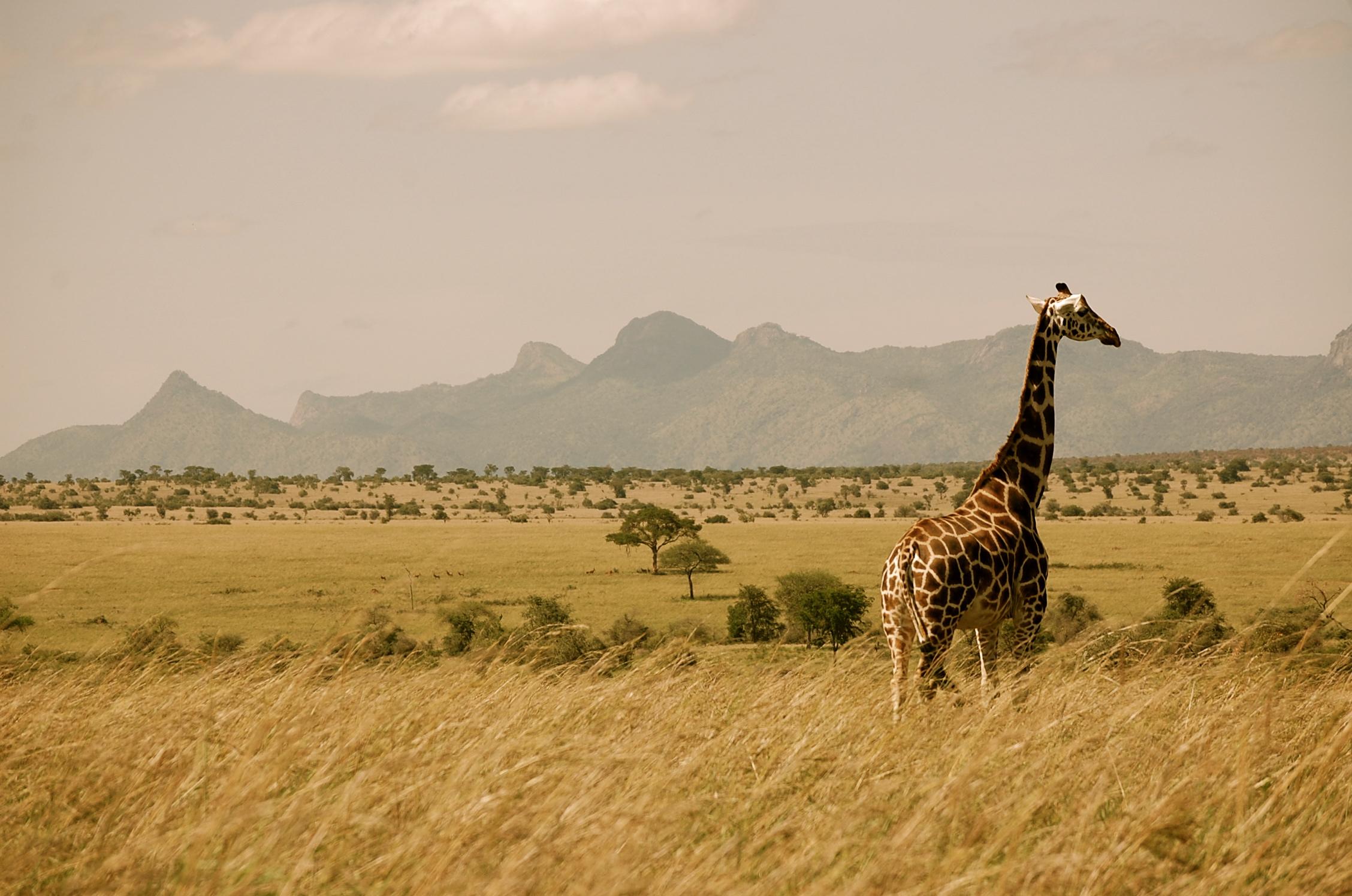 Уганда Жираф 5X1NH