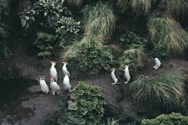 VK0M Macquarie Island