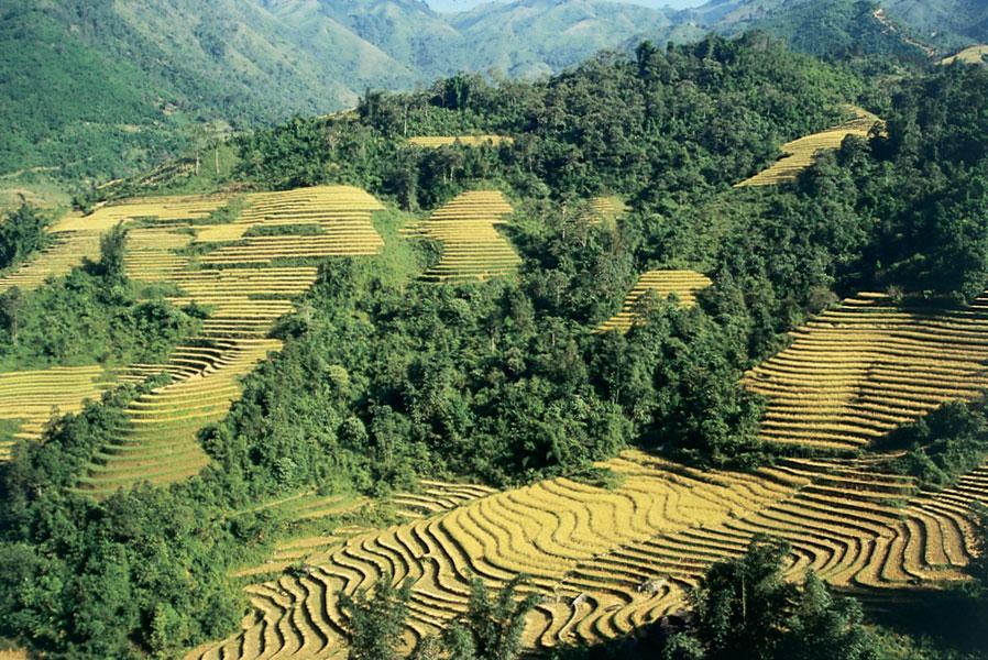 Вьетнам 3W7W