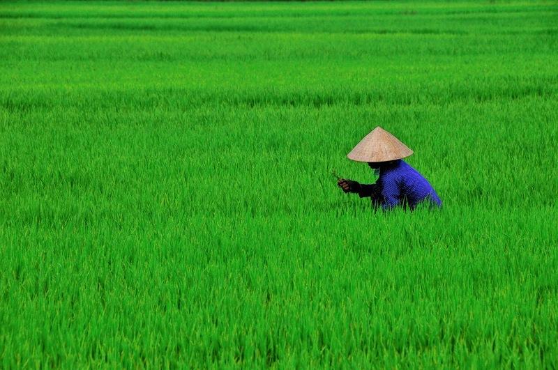 Вьетнам XV2RZ 2012 DX Новости