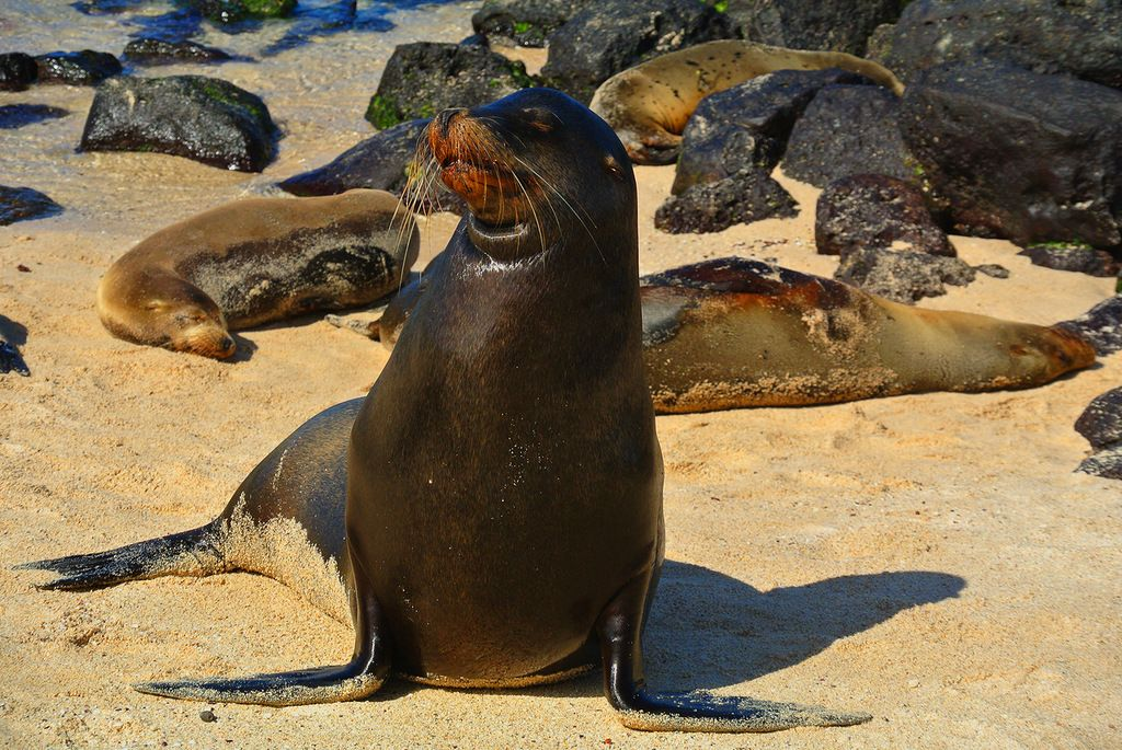 Isabela Island Galapagos Islands HC8ART Tourist Attractions