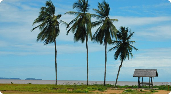 French Guiana TO1A