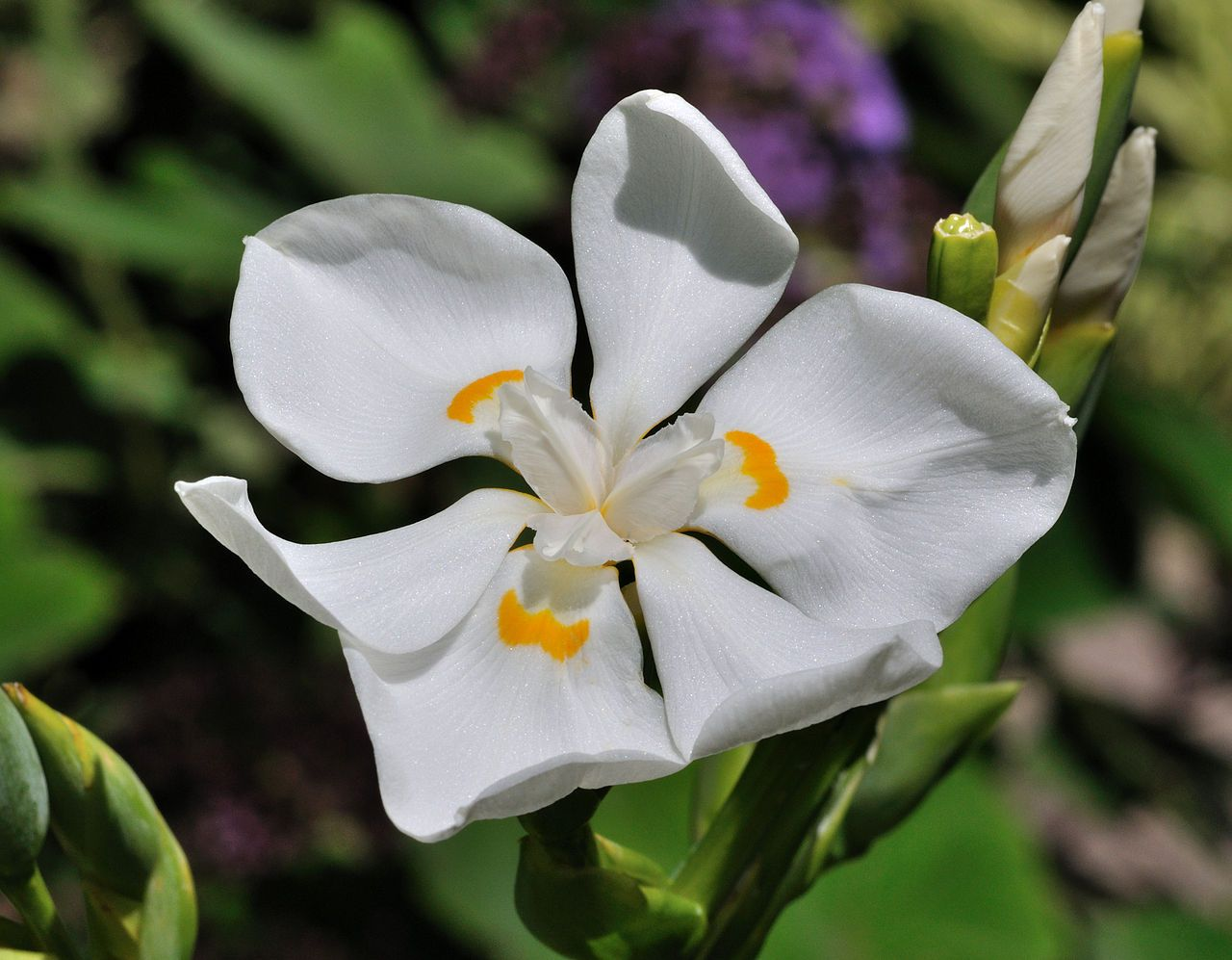 Lord Howe Island Wedding Flower