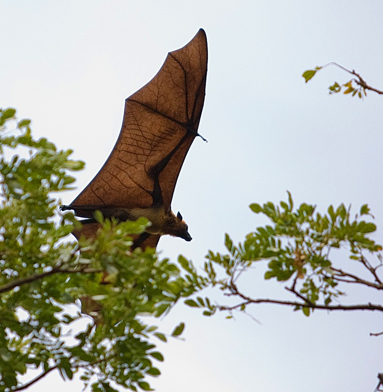 Papua New Guinea P29FR Flying Fox