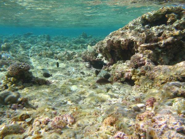 3B7A Острова Каргадос Карахос Скалы Святого Брендона Туристические достопримечательности Коралловый Риф