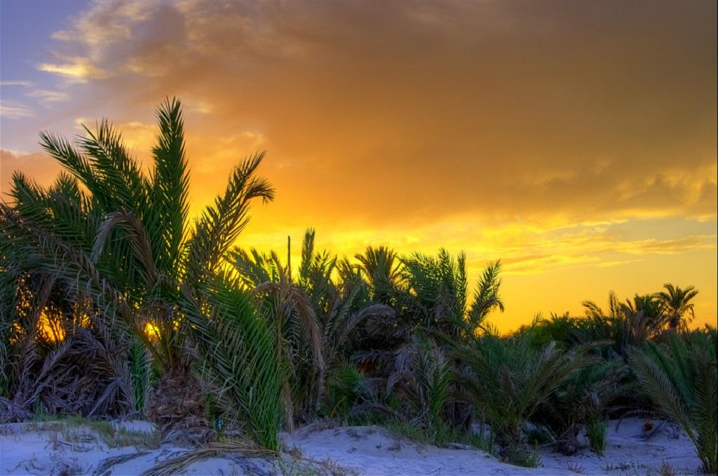 3V8TD Djerba Island Sunset