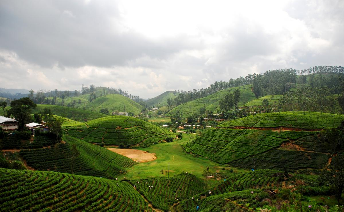 4S7BHG Sri Lanka Tea plantations DX News