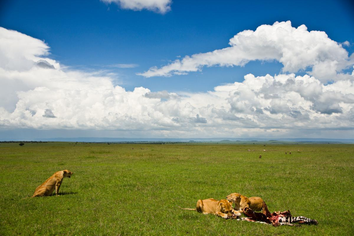 5H0JK Serengeti, Tanzania. Tourist attractions spot.