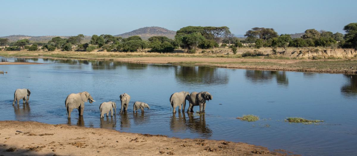 5H3ARC Ruaha National Park, Tanzania. Tourist attractions spot.