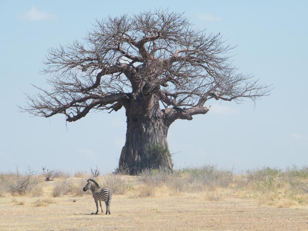 5H3ARC Национальный парк Руаха, Танзания.