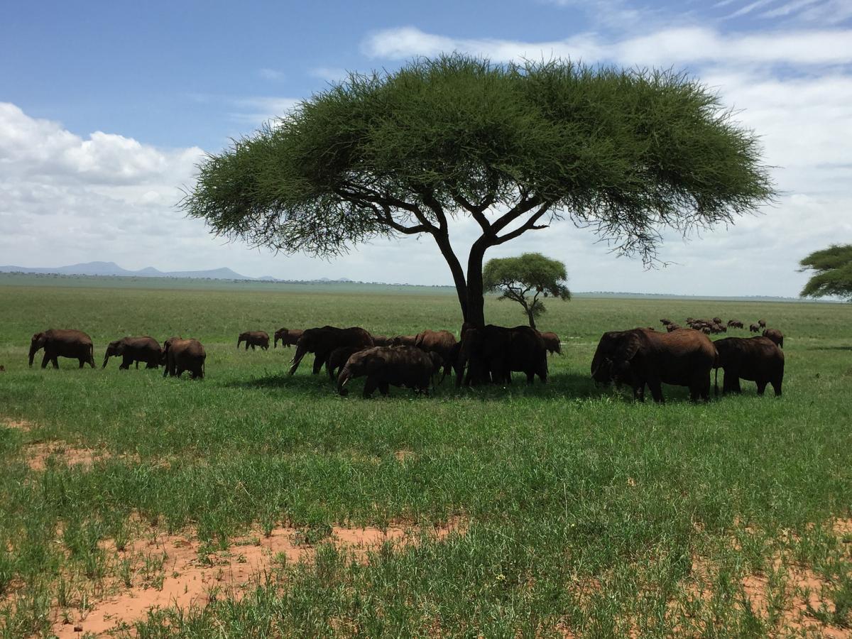 5H/ON5PF Tanzania