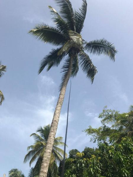 5V7P Togo News 23 April 2017 160m Palm Antenna Image 2
