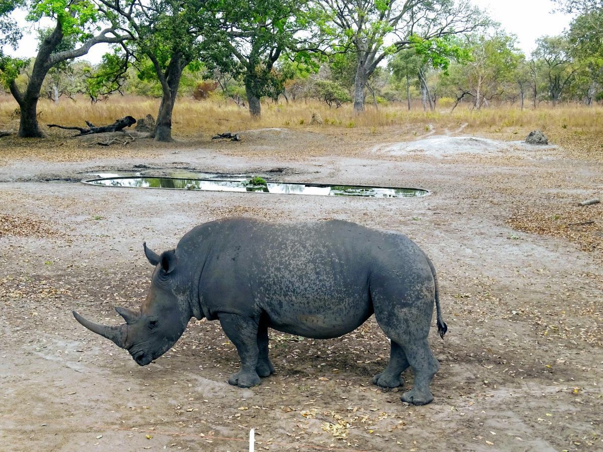 6W/IK5BSC Rhino, Fathala Lodge, Senegal. Tourist attractions spot