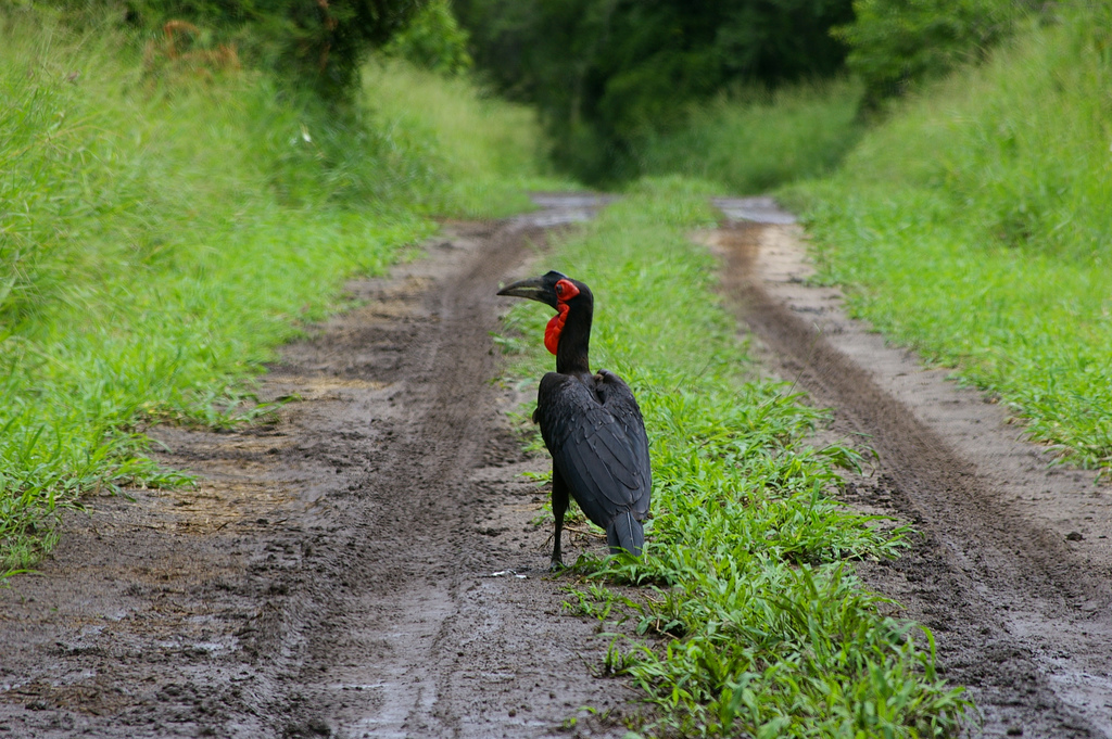 7Q7EI Malawi Tourist attractions spot Hornbill