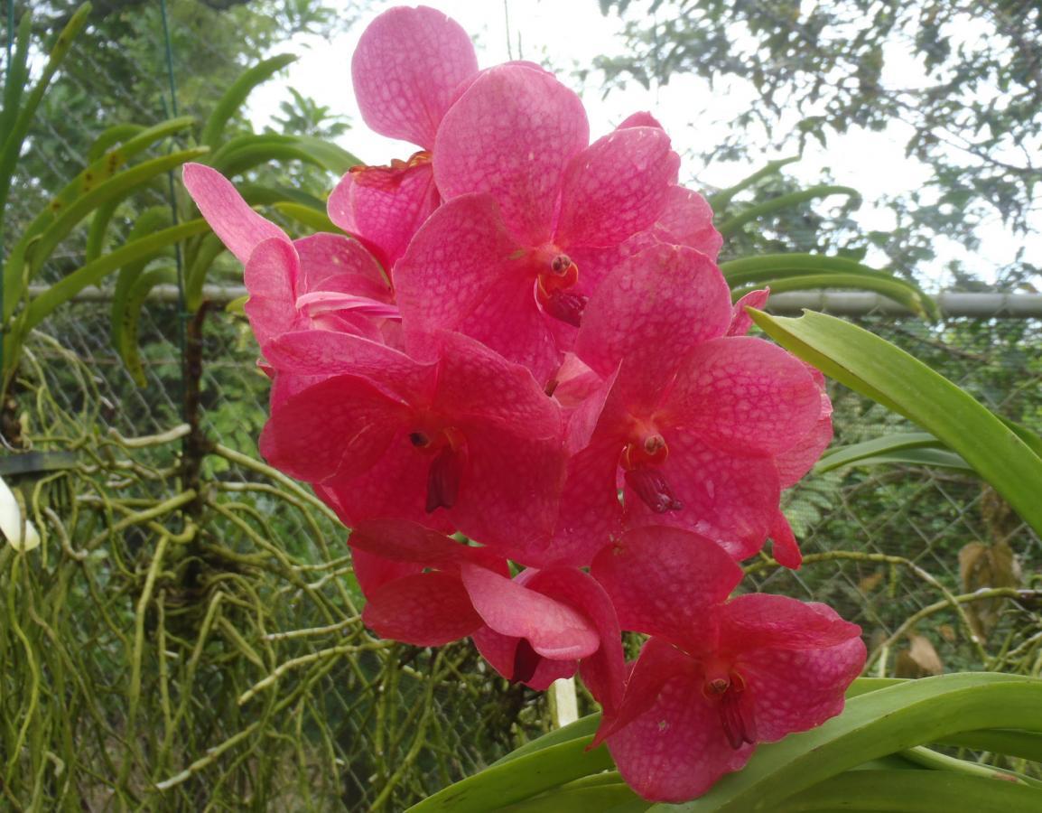 8P0VR Остров Барбадос Орхидея