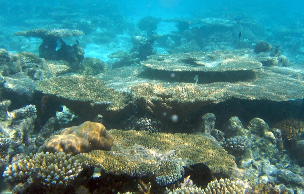 8Q7GB Остров Ника, Мальдивы DX Новости