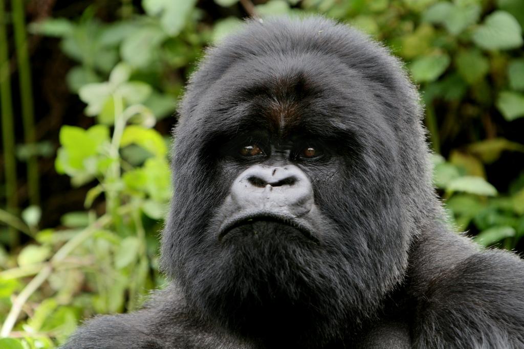 9X2S Gorilla, Rwanda