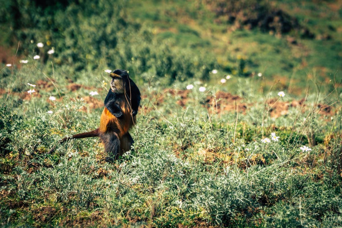 9X4XX Руанда Туристические достопримечательности