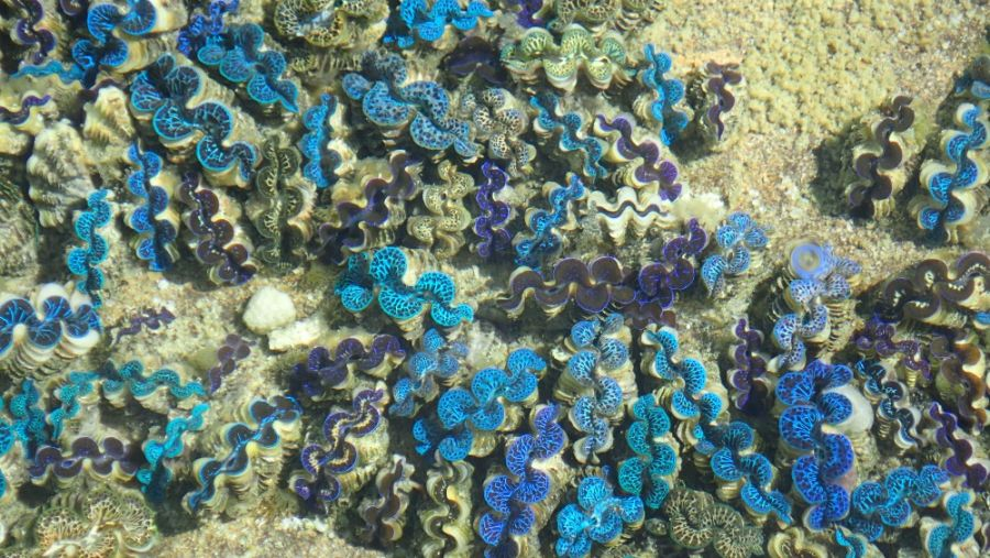 Остров Аитутаки Острова Кука Красоты подводного мира фото 11