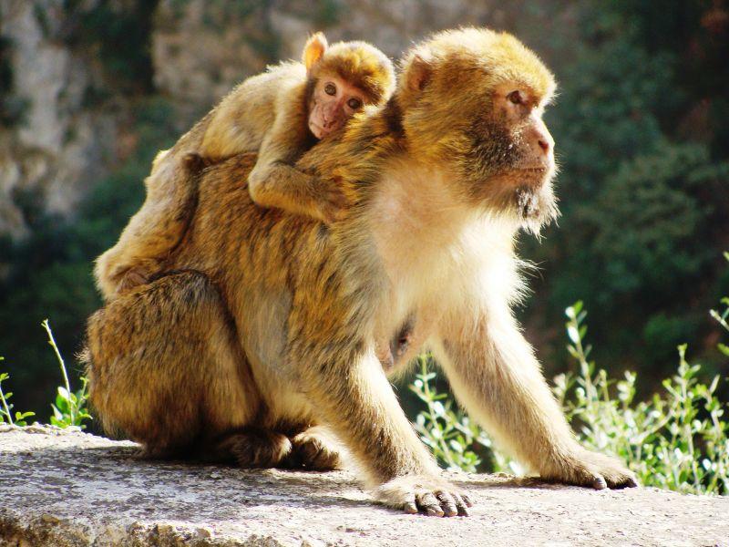 Алжир 7U9C Туристические достопримечательности Не трогайте мою любовь.