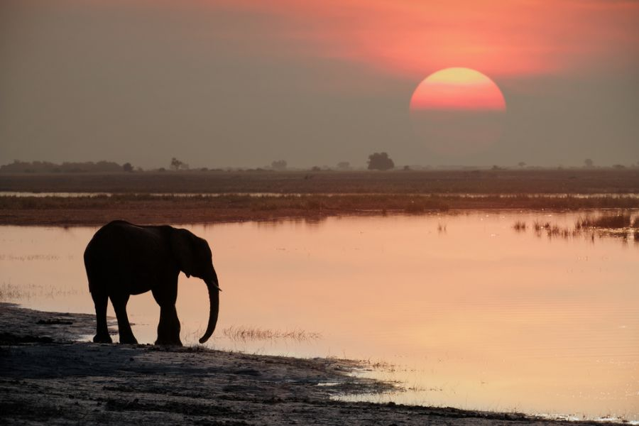 Ангола D2ACE Слон на водопое.