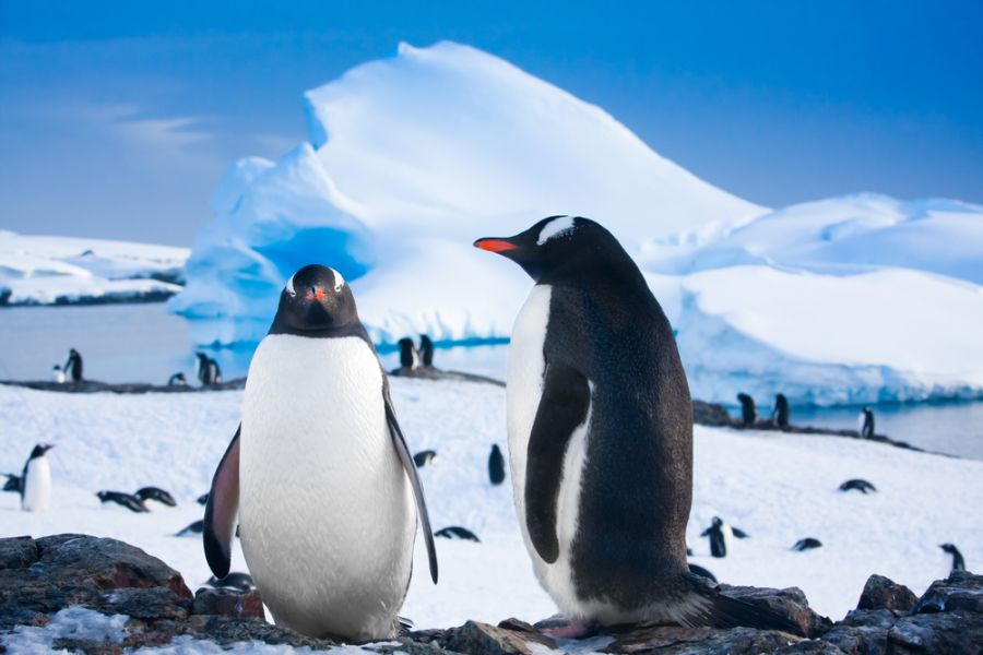 Antarctica 8T2BH DX News Penguins resting.