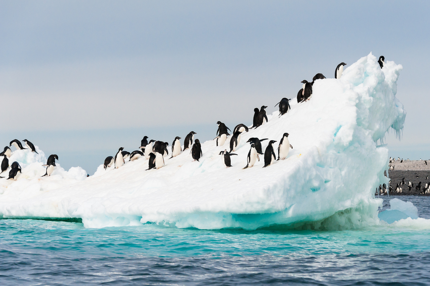 Antarctica RI1ANZ Tourist Attractions