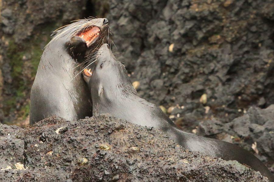 ZL9A Остров Антиподов Хочешь поцелую