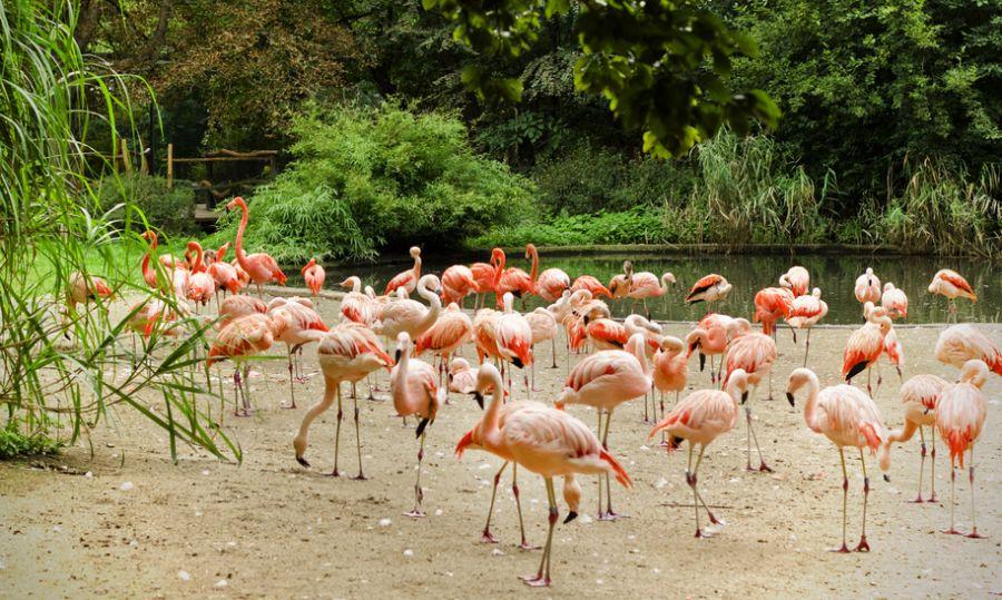 Aruba P4/VE7NX Tourist attractions