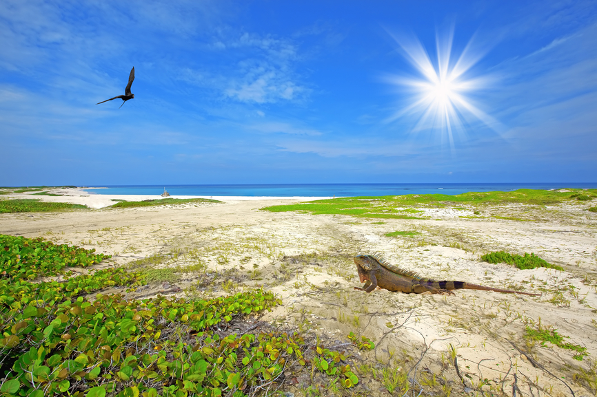 Aruba P4/W6HGF P40HF DX News Iguana