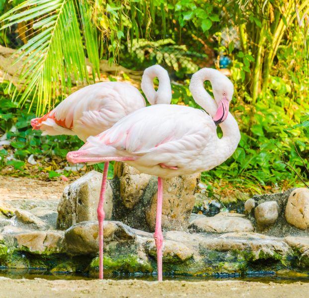 Остров Аруба P40C Туристические достопримечательности