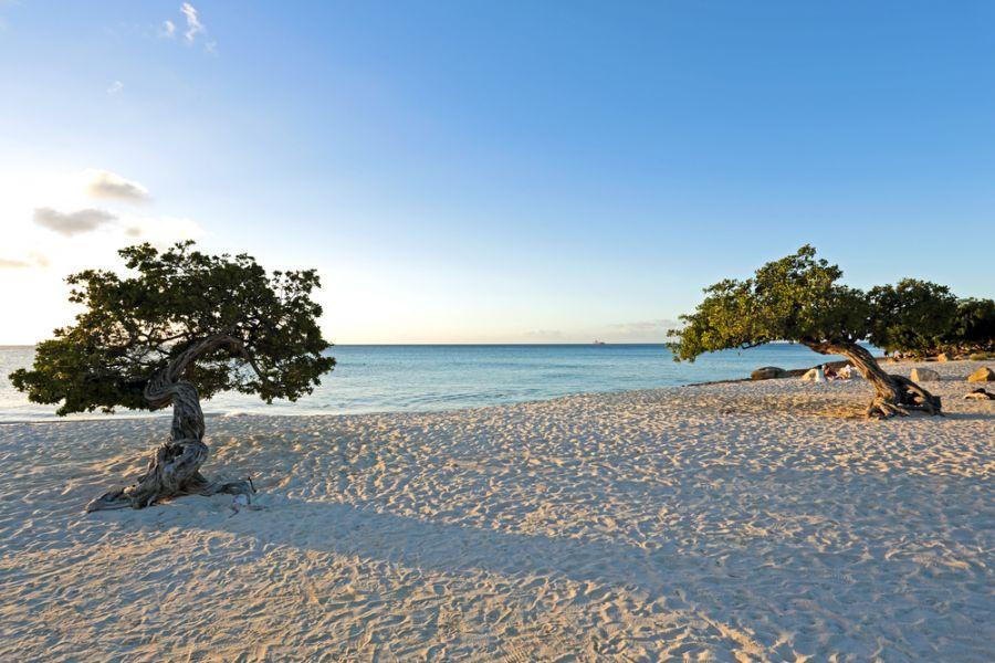 Aruba P40DX Divi divi trees