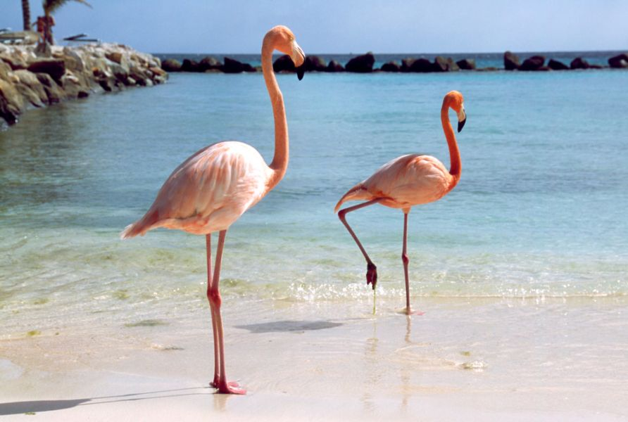 Aruba P40ER Tourist attractions spot