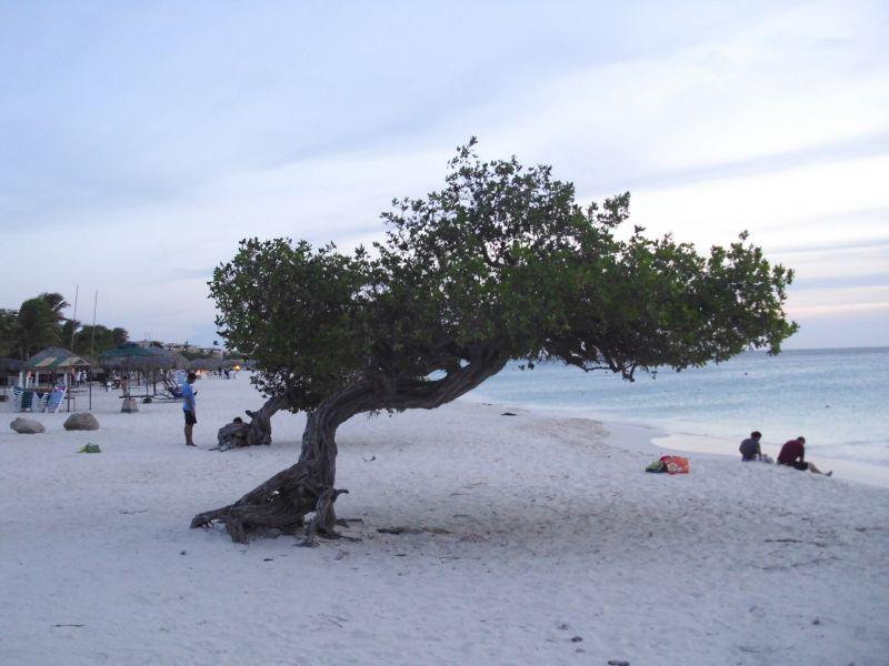 Aruba P40PX DX News