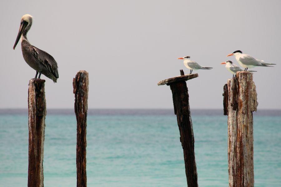 Остров Аруба P40Z Туристические достопримечательности