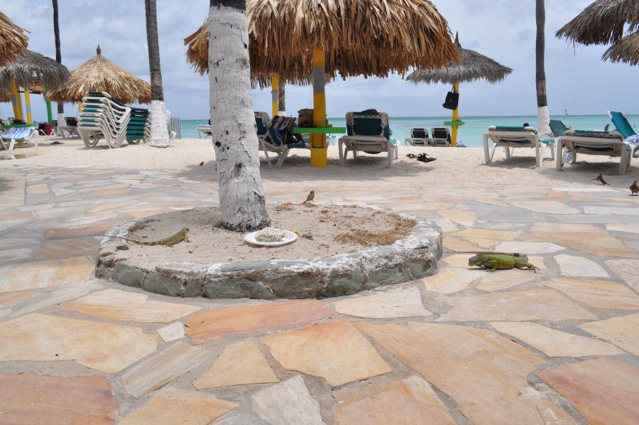 Aruba P4/NU4N Tourist attractions