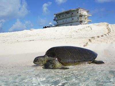 Aves Island YX0V DX Pedition