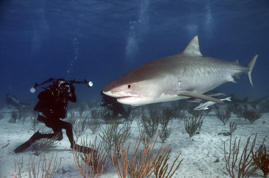 Bahamas C6AUM Tourist Attractions