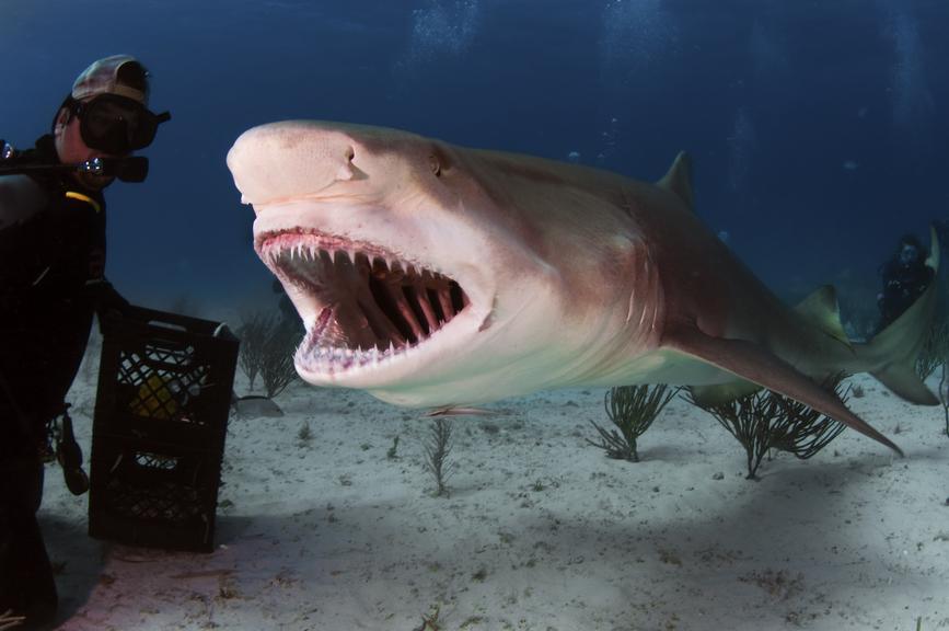 Bahamas C6AAS DX News Lemon Shark Roar