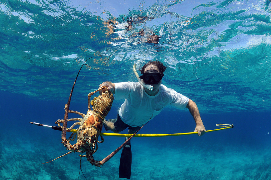 Bahamas C6AAS Tourist attractions Spearfishing for lobster