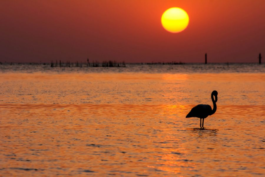 Bahrain A96A Flamingo, Karzakan beach.