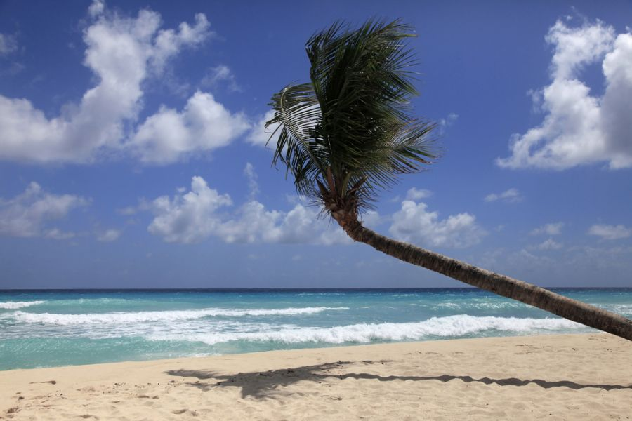 Barbados 8P9CA Tourist attractions spot Untouched tropical beach with a palm tree.