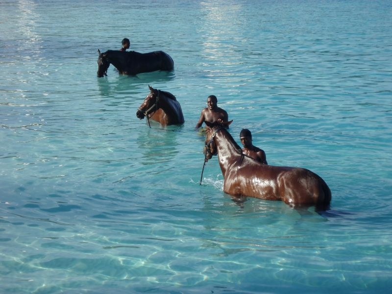 Barbados 8P9ER DX News Horses.