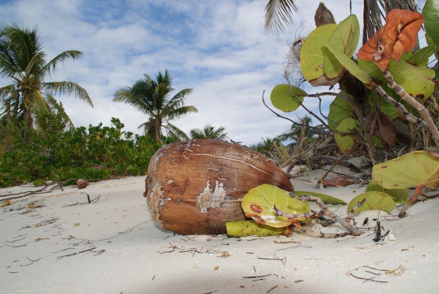 Barbuda Island V26GT Tourist attractions spot