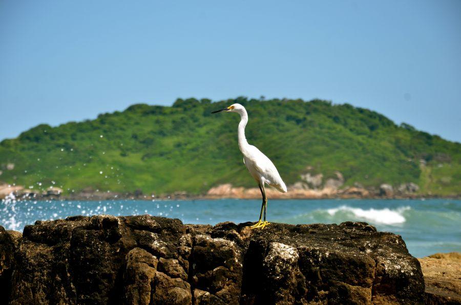 Batuta Island ZX5B DX News