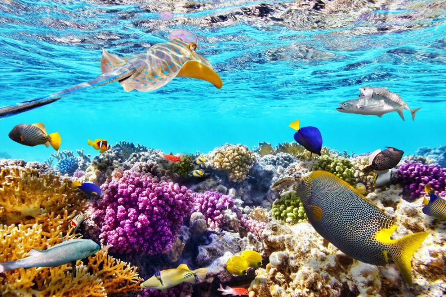 Белиз V3A Прекрасный подводный мир с кораллами и тропическими рыбами