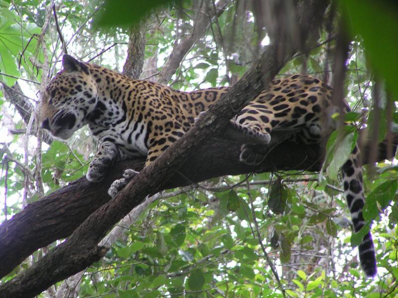 Belize V31TT Tourist attractions spot